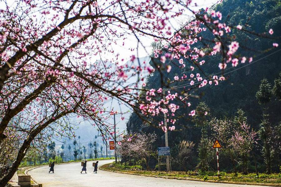 Du lịch Hà Giang vào những ngày đầu xuân rộn ràng