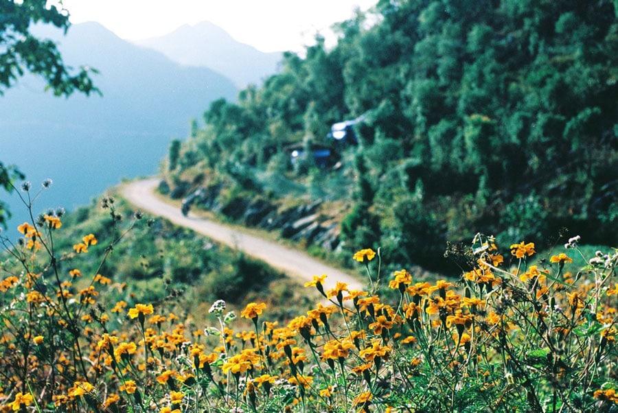 Ngắm nhìn những cung đường đá nở đầy hoa ở Hà Giang